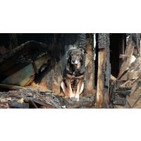 Will your Pet Survive the Bushfires this Summer?